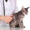 Ветеринарные клиники в Балтаси